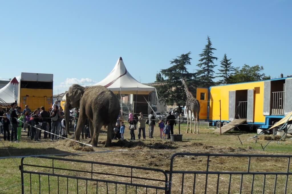 Un'elefante e una giraffa in un circo