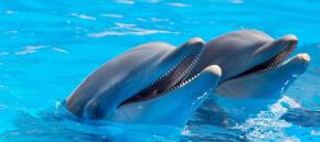 Delfinario di Rimini, primo sequestro di animali in Europa