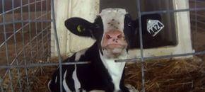 Paradossi della legge: filmare crudeltà su animali è reato?