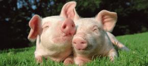 Eurispes 2014: siamo sempre più sensibili verso gli animali