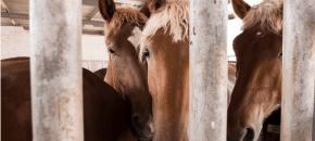 #ViaggiSenzaRitorno: cosa si nasconde dietro la carne di cavallo
