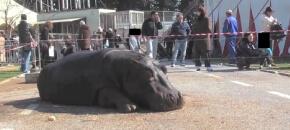 Incidente mortale dell'ippopotamo Aisha
