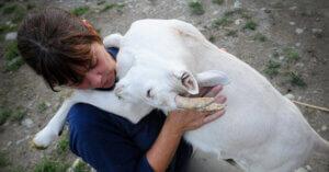 Eurispes 2015: cresce sensibilità degli italiani sui Diritti Animali