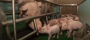Sui bus di Genova una campagna per gli animali lunga un mese