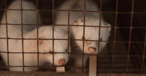 Cosa significa nascere con la pelliccia?
