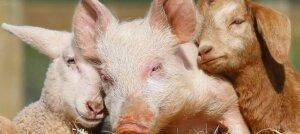 Il Rapporto Eurispes 2016 fotografa un'Italia animalista