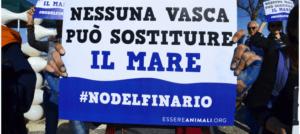 Rimini, riparte il processo al Delfinario