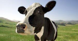 Gli italiani stanno abbandonando il latte?