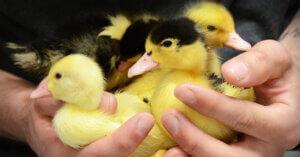 6 modi per dimostrare il tuo amore per gli animali