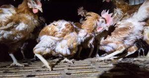 Repubblica Ceca verso il divieto di allevamenti da pelliccia