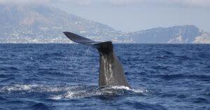 Trivelle: quali impatti sulla fauna marina?