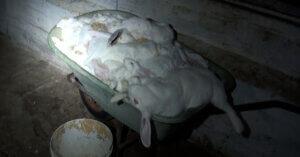 [VIDEO] Abbiamo denunciato un allevamento di conigli