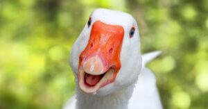 Sì! Eataly dice Stop al Foie Gras