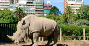 Dopo 140 anni lo zoo di Buenos Aires chiude!