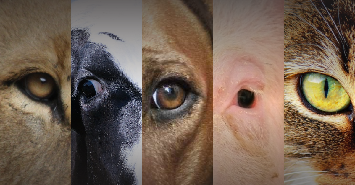 animali diversi