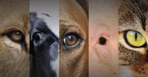 Animali di serie A, animali di serie B