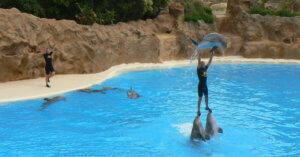 7 buoni motivi per non visitare i delfinari