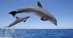 """L'acquario di Baltimora """"libera"""" tutti i suoi delfini"""