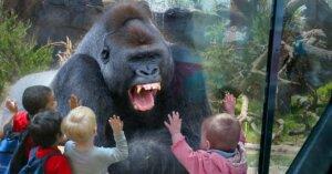Tre (falsi) motivi per cui andiamo allo zoo
