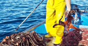 La pesca dei polpi, una tradizione violenta