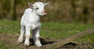 10 foto e un video che ci faranno ricordare perché amiamo gli animali