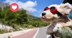 5  consigli +1 per una vacanza amica degli animali