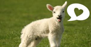 Stai pensando alla scelta vegan? Ti starai facendo queste domande!