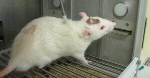 Sperimentazione animale: ancora un calo in Italia