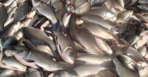 Mangi il pesce? Ecco alcune cose che dovresti sapere