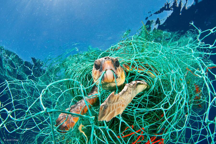 una tartaruga impigliata in una rete da pesca