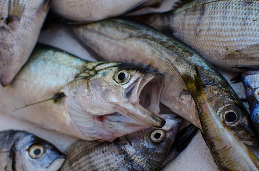 Mangi pesce ecco alcune cose che dovresti sapere - Pesci piu comuni in tavola ...