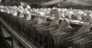 Chiedi a Carrefour di cessare la vendita di Foie Gras