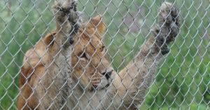 Captive: ovvero l'inquietante tristezza degli zoo