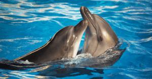 Barcellona decide di liberare i suoi delfini