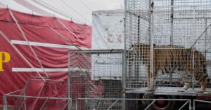 Madrid e Bucarest dicono stop ai circhi con animali