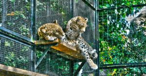 Il Bioparco di Roma da zoo a centro di recupero?