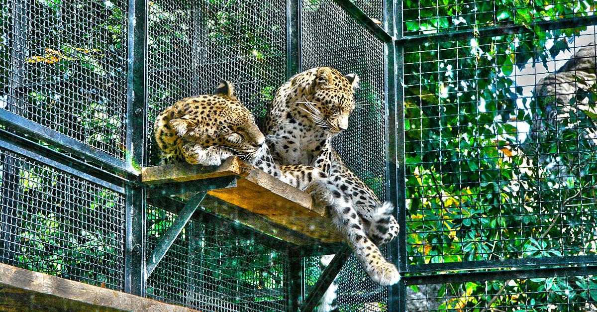 Il bioparco di roma passer da zoo a centro di recupero - Immagini di animali dello zoo per bambini ...