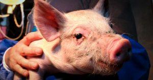 5 motivi per donare il tuo 5×1000 a Essere Animali