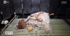Su Rai 3 scomode verità sulle uova