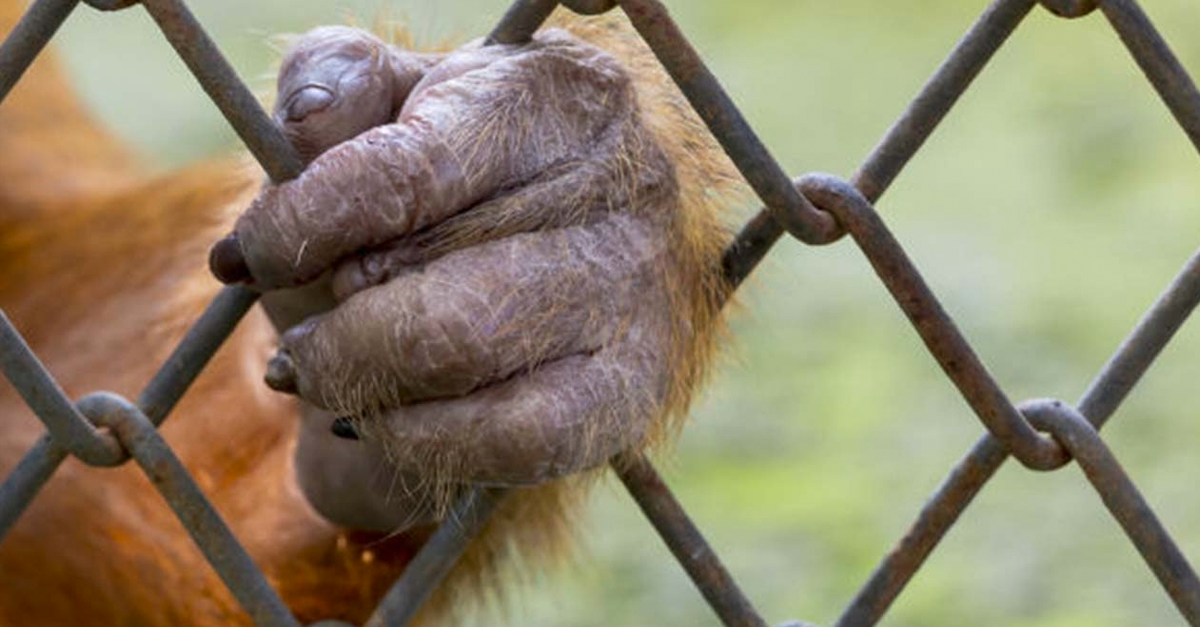 zoo animali prigionieri