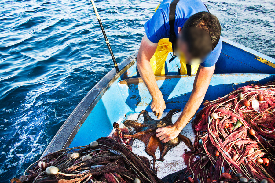 polpi no alla pesca
