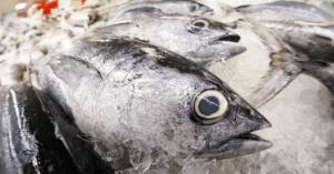 Pesce: l'abbiamo mangiato tutto!