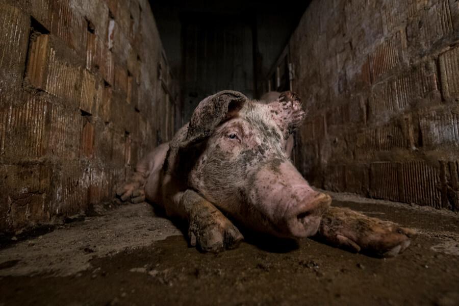 carne rossa aumenta mortalità lo dice il british medical journal