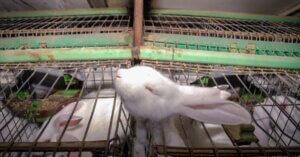 La potenza delle immagini: 10 foto che testimoniano la crudeltà verso gli animali