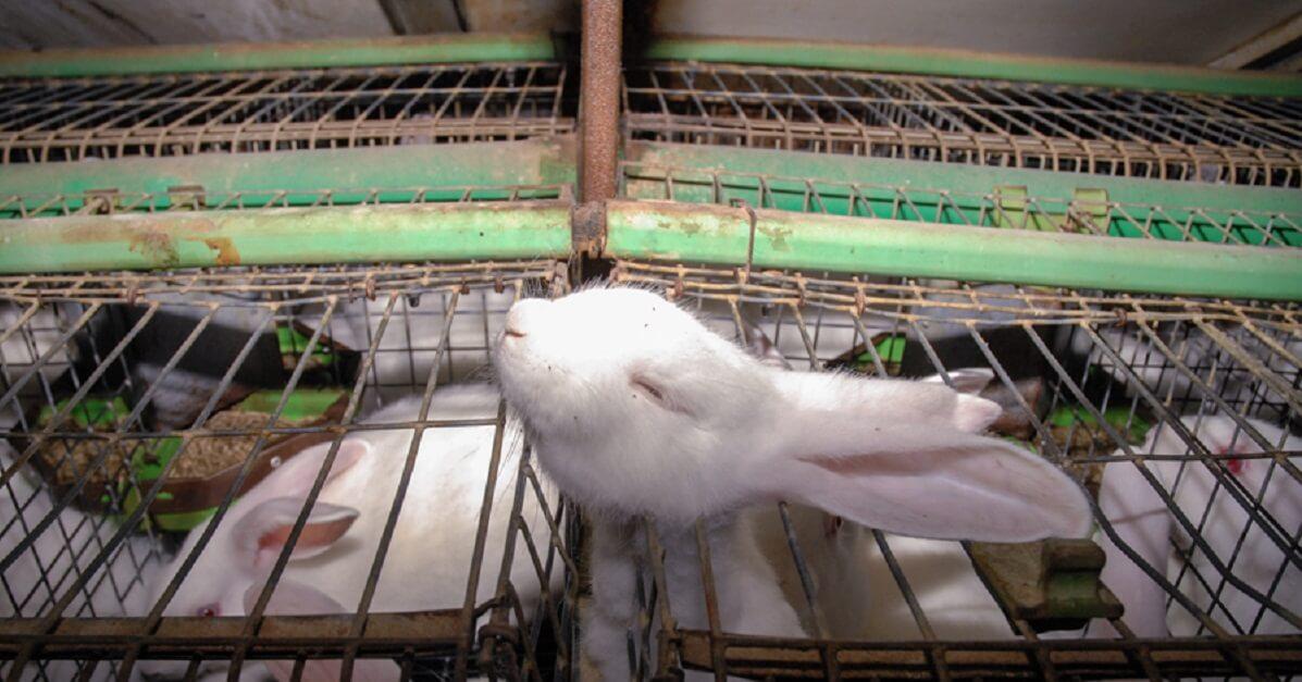 Un coniglio incastrato in una gabbia.