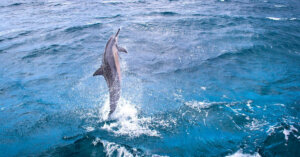 La Francia ha votato per la fine dei delfinari