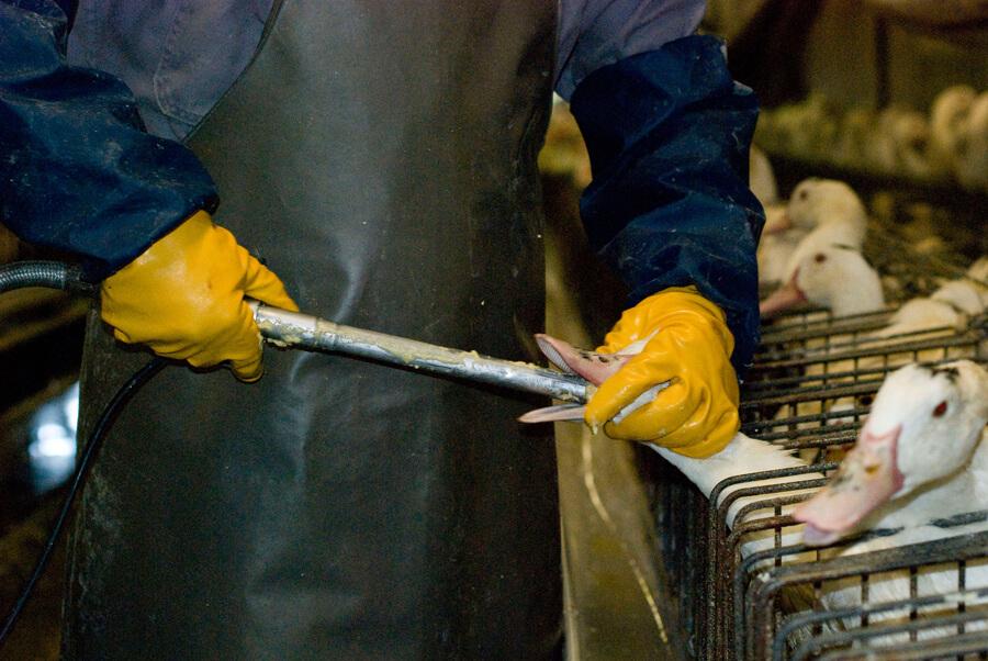 foie gras via dagli scaffali dei supermercati