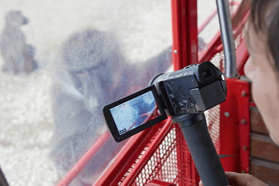 harambe e la realtà degli zoo