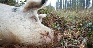Cosa fanno gli animali quando non vengono sfruttati?