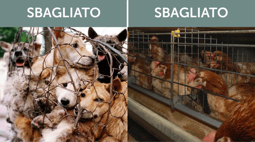 perché mangiare carne di cane
